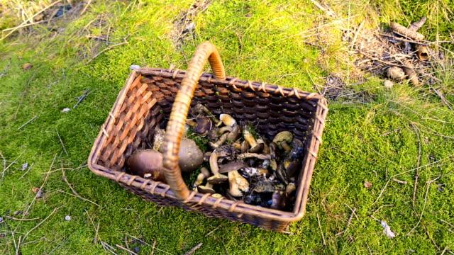 mushrooms in the wicker basket video
