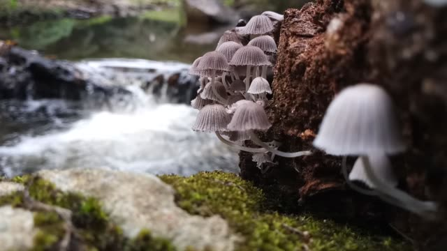 Mushrooms on old log near the waterfall