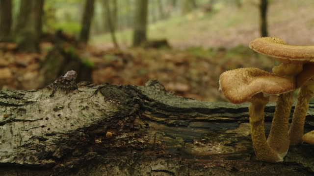 HD DOLLY: Mushrooms video