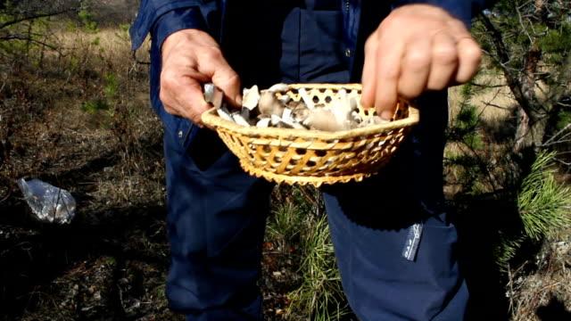 mushrooms. - höst plocka svamp bildbanksvideor och videomaterial från bakom kulisserna
