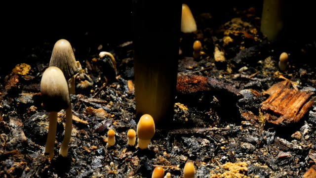 Mushrooms video