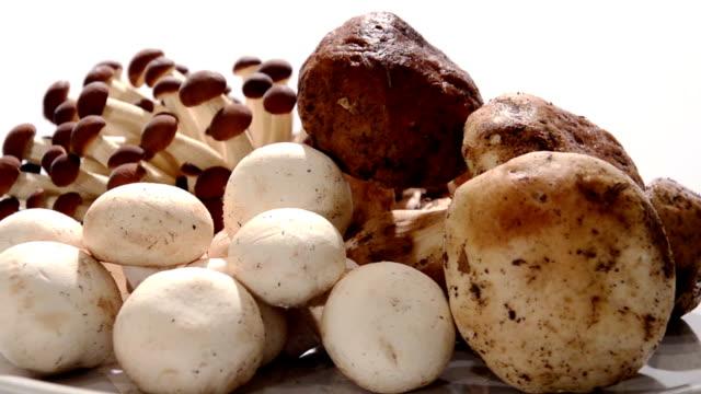 svamp - höst plocka svamp bildbanksvideor och videomaterial från bakom kulisserna