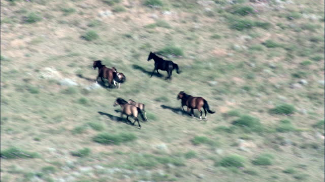 Mustangs In Wild Horse Sanctuary  - Aerial View - South Dakota, Fall River County, United States This clip was filmed by Skyworks on HDCAM SR 4:4:4 using the Cineflex gimbal. mustang wild horse stock videos & royalty-free footage