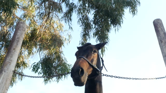Muzzle horse's on the sky and tree background video