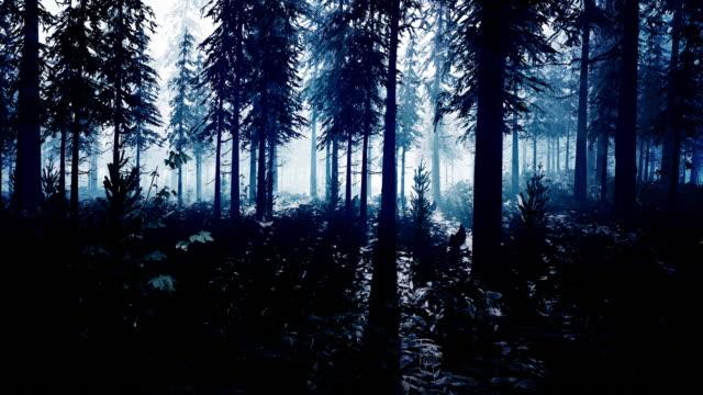 en mystisk mörk skog upplyst av ett utomjordiskt vitt ljus - rymdvarelse bildbanksvideor och videomaterial från bakom kulisserna