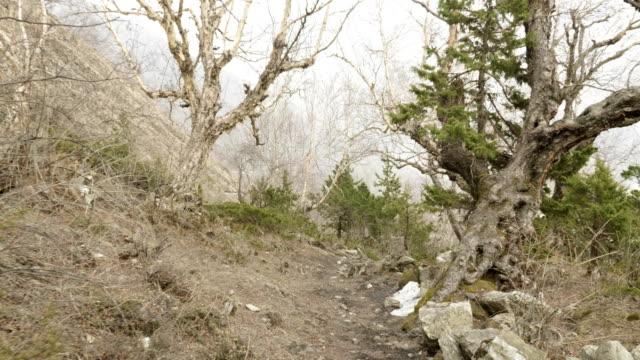 ネパールの山の中の神秘的な森。 - ネパール人点の映像素材/bロール