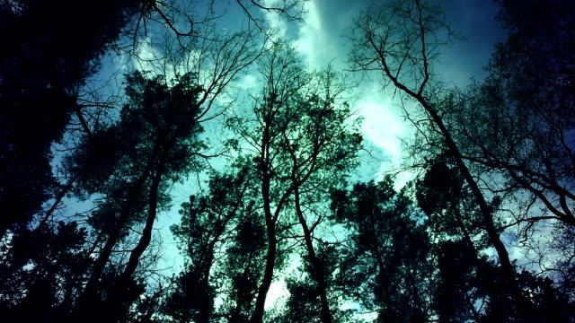 foresta misteriosa nel vento alla sera. - fronda video stock e b–roll