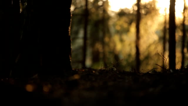 mysterieuze bos in de zon video