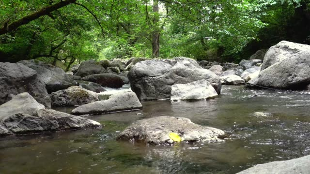 Mysterious mountainous fast stream. Magical scenery river in the middle of forest. Looping continuous video.