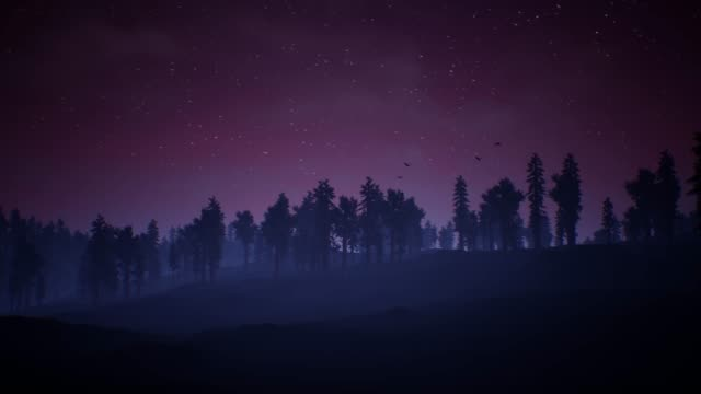 Mysterious night sky above the coniferous forest video