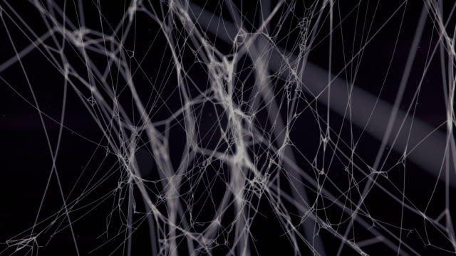 mystisk spindel netto abstrakt sammansättning omgiven av flygande partiklar på mörk bakgrund. 3d-rendering digital animering. mystiskt volymljus. 4k, ultra hd-upplösning - spindelväv bildbanksvideor och videomaterial från bakom kulisserna