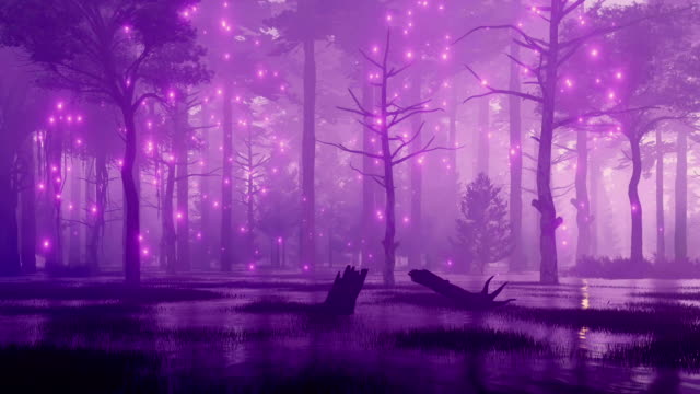 Mystic lights in fairytale swampy night forest video