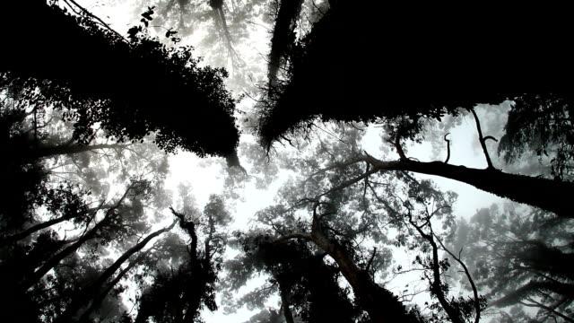Mystic Trees video