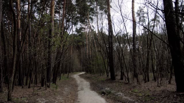 mystical and scary forest. dirty road path - imperfection stock videos & royalty-free footage