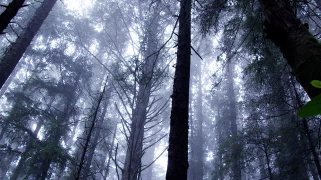 mistico nebbia rotoli su una bellissima foresta. - yeti video stock e b–roll