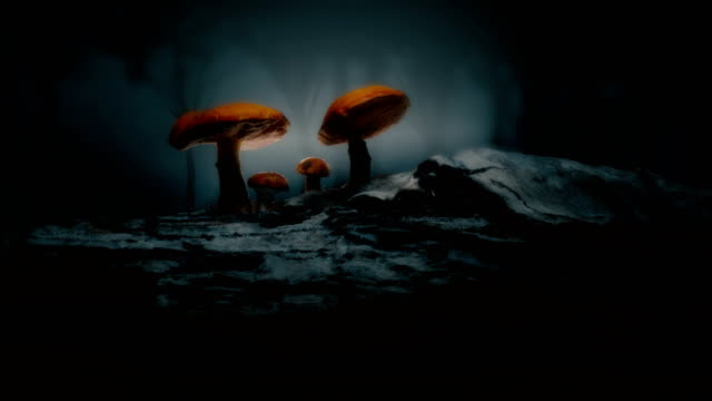 Mystical forest / magical mushroom scene. Gorgeous orbit shot of a mystical forest / mushroom scene. fairy stock videos & royalty-free footage