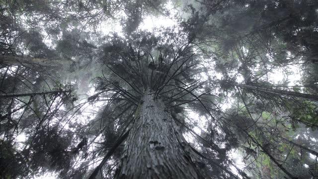 雨の中の神秘的な森の木が見上げる - ローアングル点の映像素材/bロール