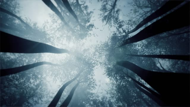 mystical forest. treetops view from the bottom. - trees in mist stock videos & royalty-free footage