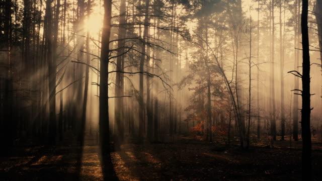 Mystical glow in the dark autumn forest