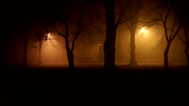 mystical misty night in the forest mystical misty night in the forest trees in mist stock videos & royalty-free footage