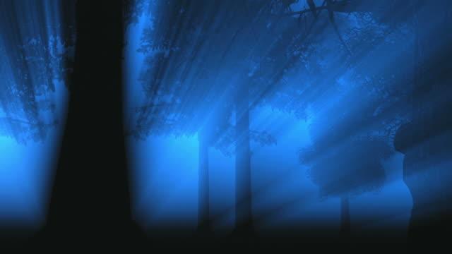 Mystical primeval forest video