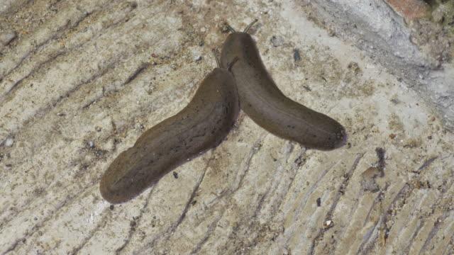 naked slug on the cement ground video