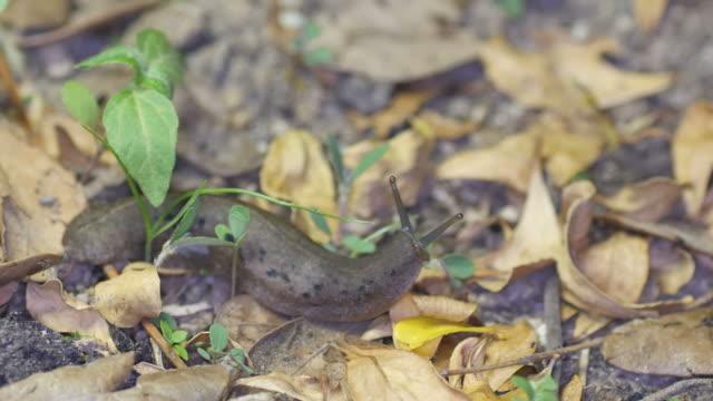 naked slug on the leaf little video