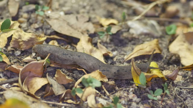 naked slug slowly movement video