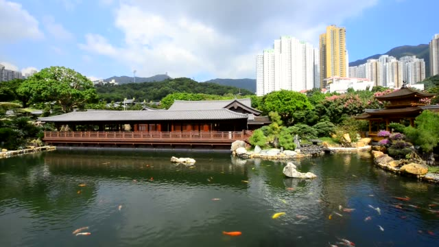vídeos de stock e filmes b-roll de nan lian garden, chi lin nunnery in hong kong. - lian empty