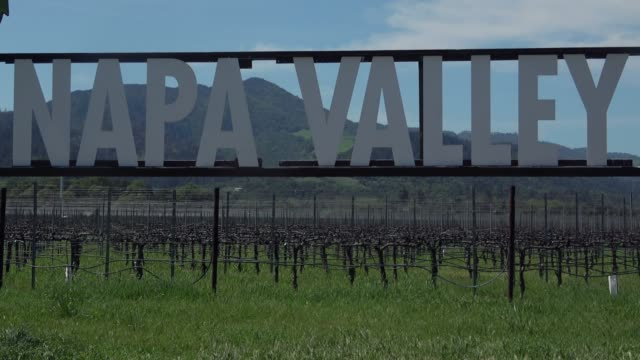 napa valley - traube stock-videos und b-roll-filmmaterial