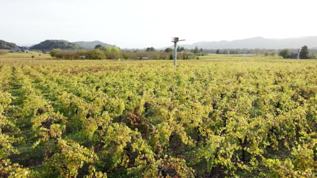 Napa Valley Vineyards video