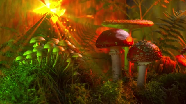Narcotic vision of mushrooms in the forest