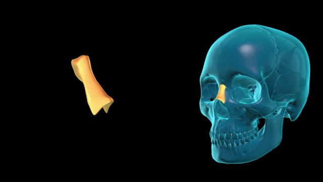 Nasal Bone video