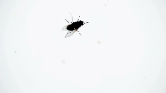 bir pencere bölmesinde pis sinek - sinek stok videoları ve detay görüntü çekimi