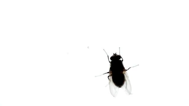 Nasty Housefly on a Window Pane