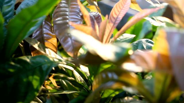 natürlichen hintergrund. kamera bewegen durch bunte laub der tropischen pflanzen. lumpinipark, bangkok, thailand - baumgruppe stock-videos und b-roll-filmmaterial