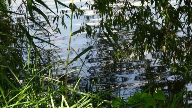 natürlicher hintergrund von sumpfwasser mit welliger oberfläche und verschwommenen reflexionen von baumblättern und flusspflanzen - wildpflanze stock-videos und b-roll-filmmaterial