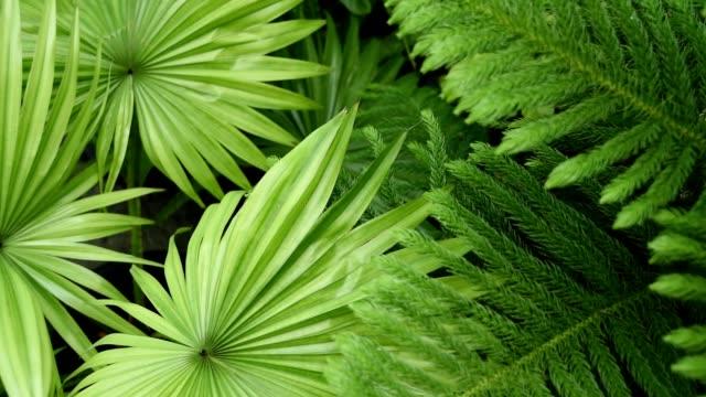 naturlig bakgrund, palm och tall, närbild - städsegrön växt bildbanksvideor och videomaterial från bakom kulisserna