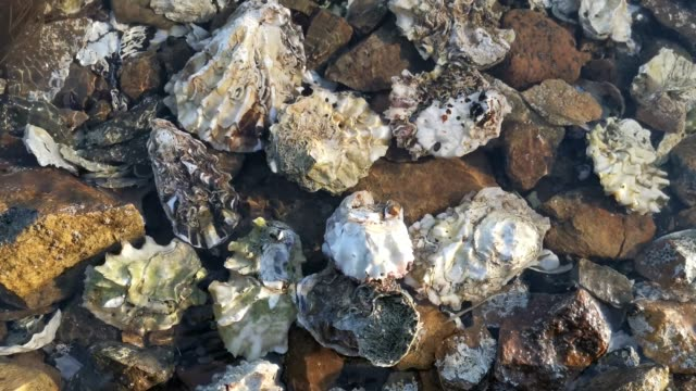Natural background with oyster shells and scallop in water.