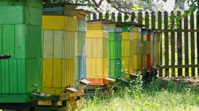 natural beehives in sunny day in summer, poland - apicoltura video stock e b–roll