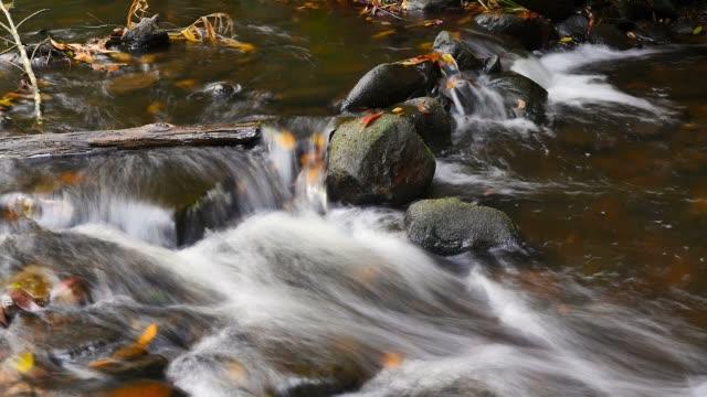 acqua fresca naturale che affluisce sulle rocce colori autunnali all'aperto - cespuglio tropicale video stock e b–roll