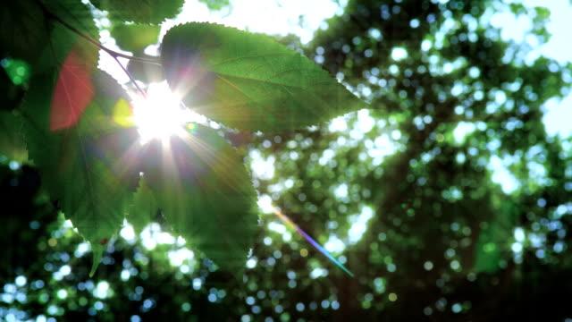 naturale sfondo verde con messa a fuoco differenziale  - colore saturo video stock e b–roll