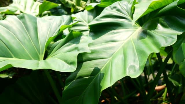 foglie verdi naturali e sfondo delle piante. - cespuglio tropicale video stock e b–roll
