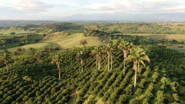 doğal manzaralar - kolombiya stok videoları ve detay görüntü çekimi