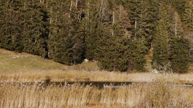 естественная трава пампасов с озером и лесом осенью, сельская швейцария. - хвойное дерево стоковые видео и кадры b-roll