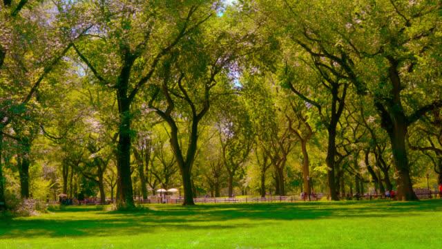 naturpark. träd. gräs. - naturparksområde bildbanksvideor och videomaterial från bakom kulisserna
