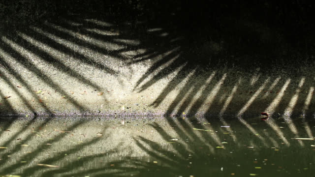 Natural patterns. Abstract shadow of Chinese fan palm tree leaves on canal wall and water Patterns in nature. Moving abstract shadow of Chinese fan palm tree leaves on old canal concrete wall and water. jul stock videos & royalty-free footage
