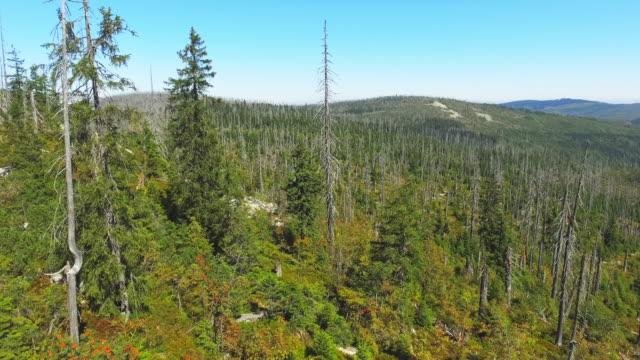Natürliche Regeneration Nadelwald – Video
