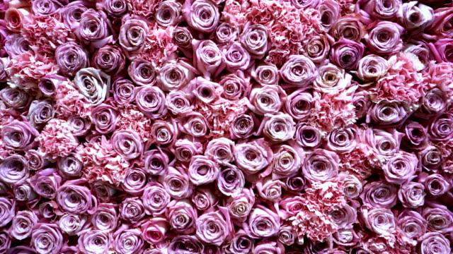 vídeos de stock, filmes e b-roll de closeup de fundo de rosas naturais - punhado