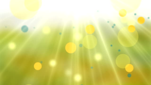 Natural Shiny Yellow Camomile Background.Loop